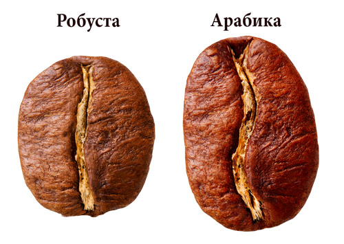 Кофе в зернах арабика и робуста -отличия